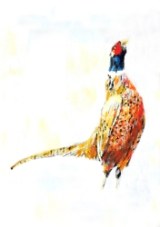 Pheasant | Natalie Knowles © 2019