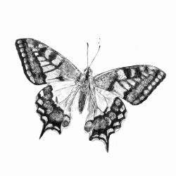 Swallowtail Butterfly | Natalie Knowles © 2020