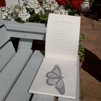 Butterfly in the garden on a Hahnemühle FineArt Sketch Pad | Natalie Knowles © 2020