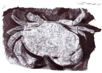 Crab 2020 | Natalie Knowles